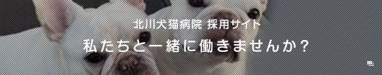 北川犬猫病院 採用ページ
